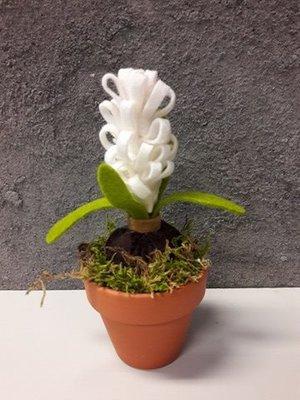 DHZ pakket hyacint in pot wit per stuk
