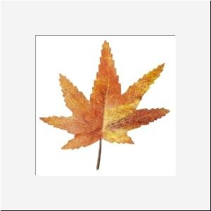 Decoratie blaadje oranje groot 6 stuks per zakje